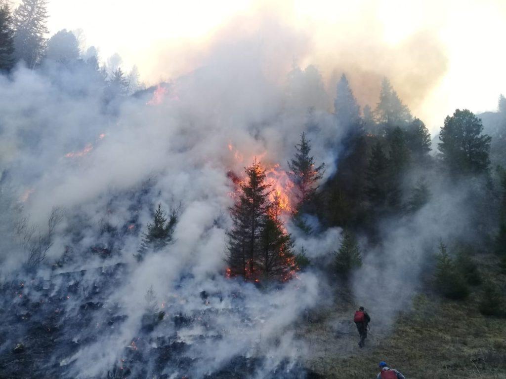 Пожар в«лучшем лесу Земли» наАлтае. Изогня спасены 36 человек