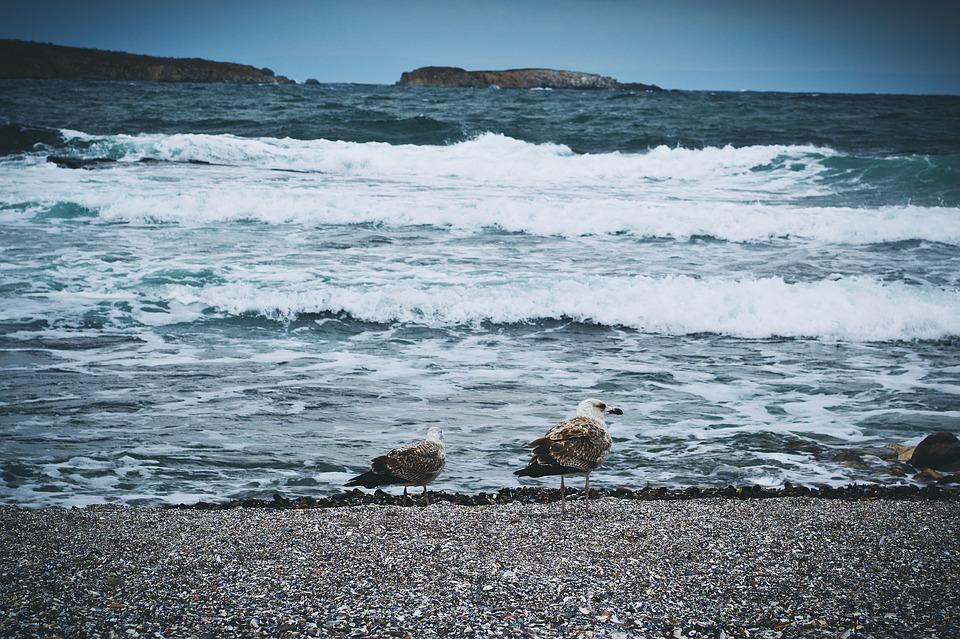 Как быстро узнать температуру воды вдесяти морях