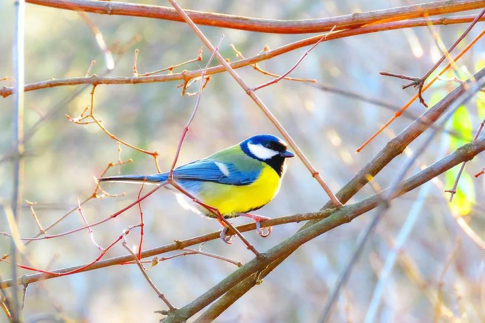 Причина массовой гибели птиц— смертельная пневмония— движется изЕвропы навосток