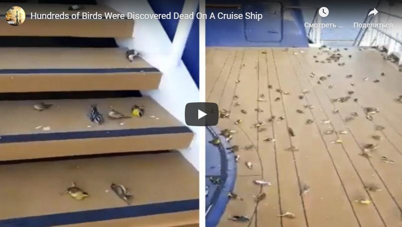 Накруизном судне обнаружили сотни погибших птиц