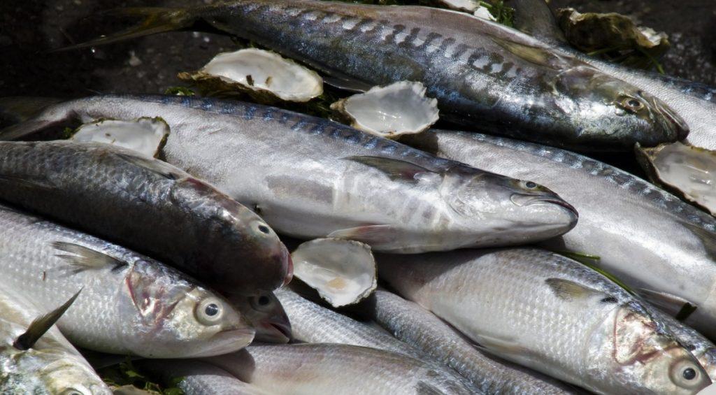Огромное количество рыбы выбросилось живьем напляж вМексике