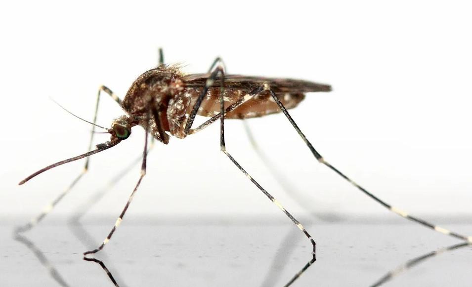 Вкоже человека обнаружены вещества, отпугивающие комаров