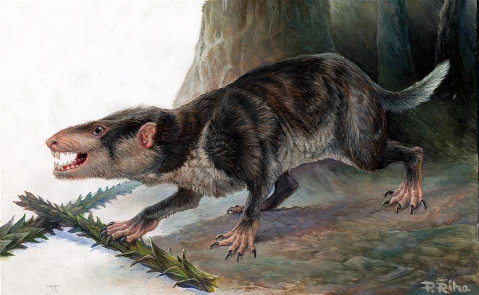Некоторые млекопитающие могли выращивать новые зубы