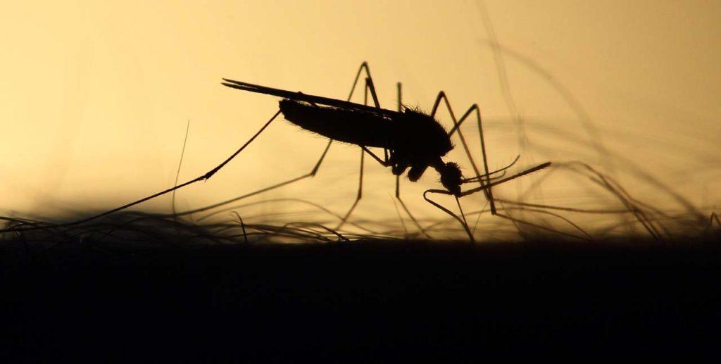 ВоФлориде собираются выпустить три четверти миллиарда ГМО-комаров