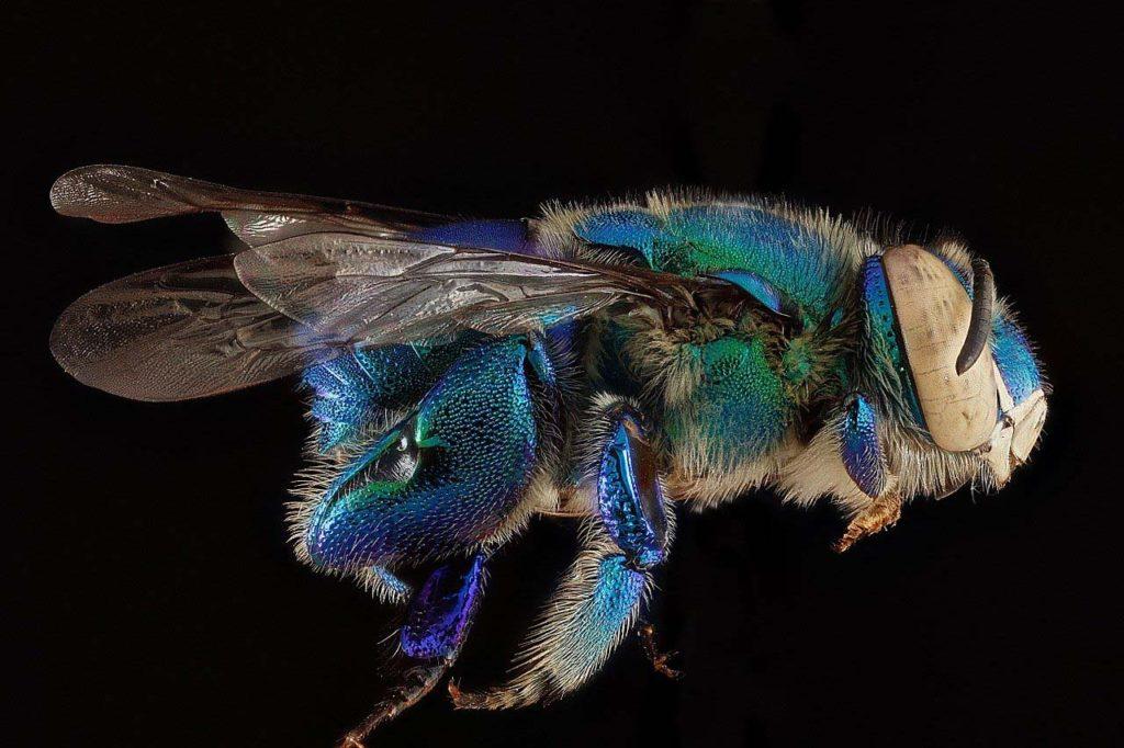 Небывалая гибель пчел зафиксирована вСША