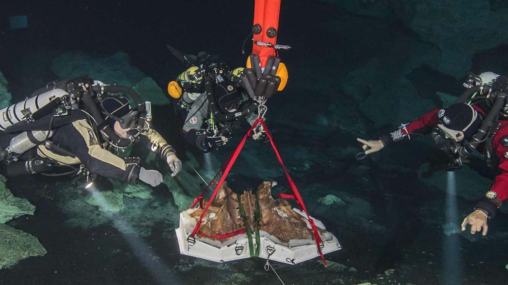 Ученые достали изпещеры кости гигантского ленивца нового вида