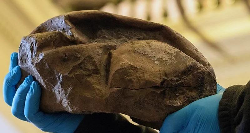 ВАнтарктиде нашли гигантское яйцо неизвестного существа