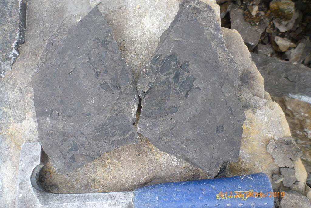 obrazec s ostatkami dvojakodyshashhej ryby
