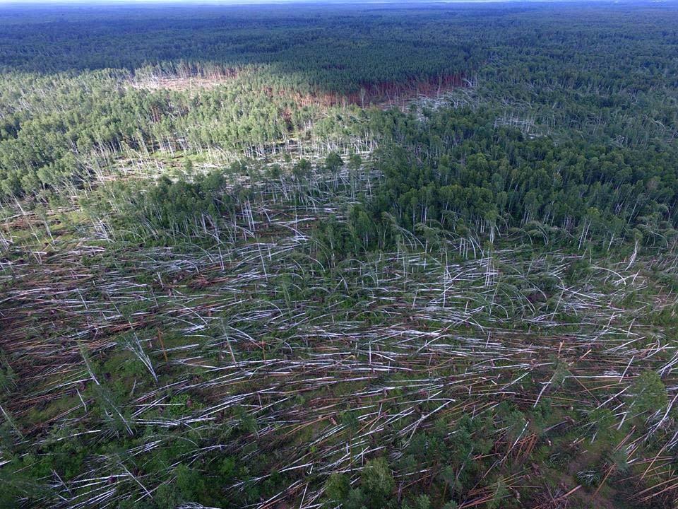 ВРязанской области смерч повалил заповедный лес