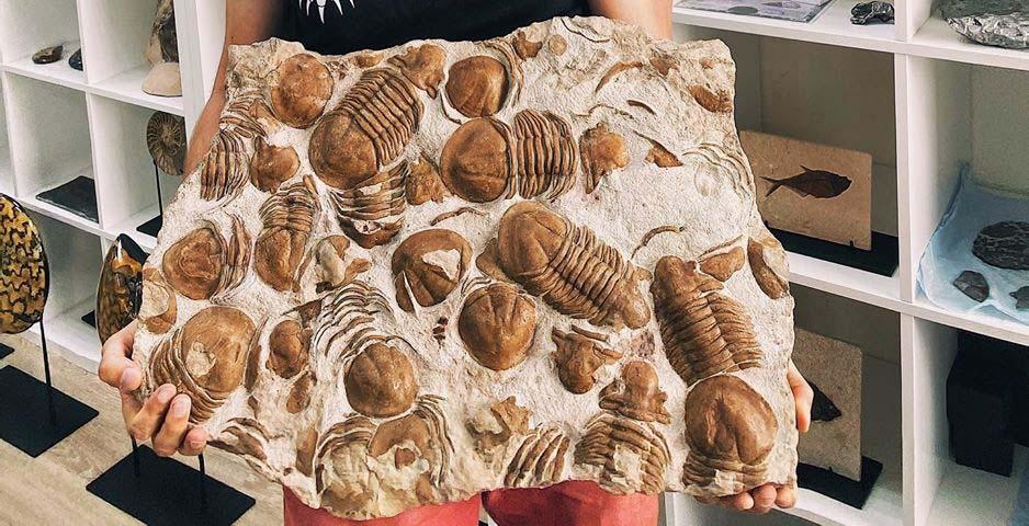 ВЛенобласти нашли большую плиту ссуществами, возраст которых оценен вполмиллиарда лет