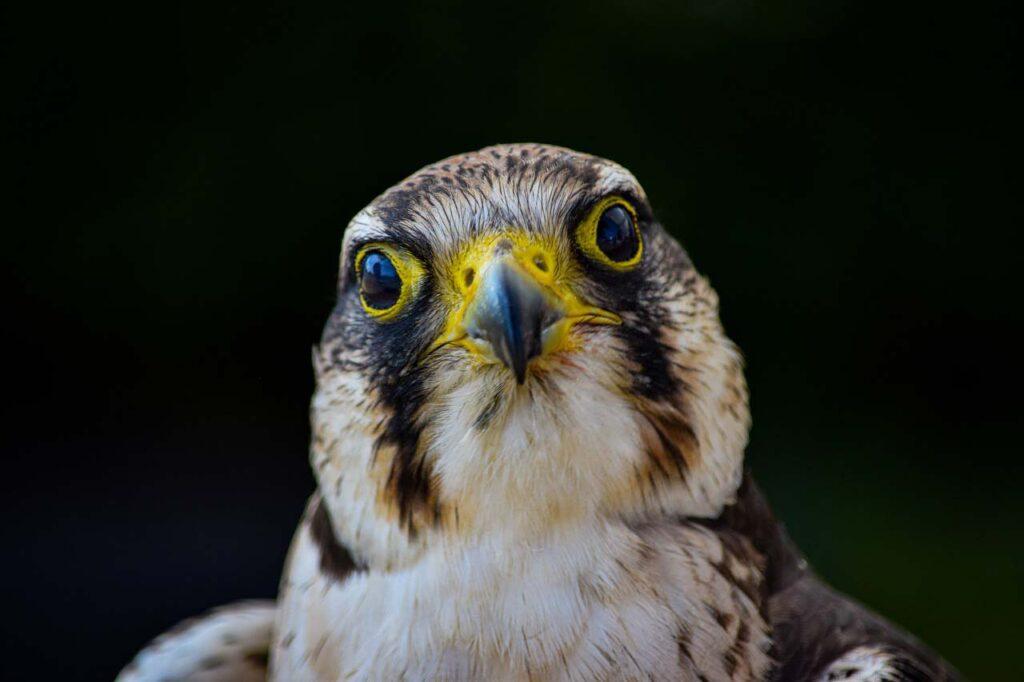 Слезы птиц ирептилий оказались очень похожими начеловеческие