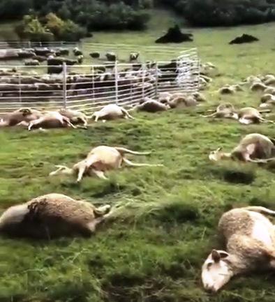 ВИспании молния убила более 30 овец