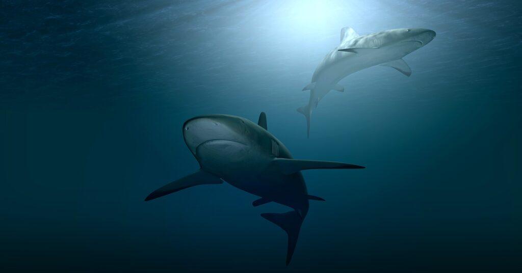 Наегипетском курорте акула откусила руку мальчику ипоранила еще двоих