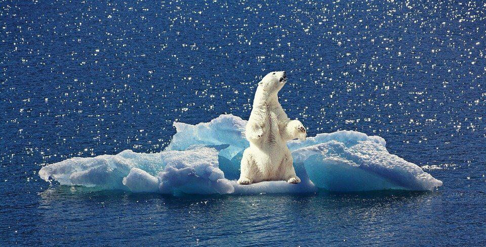 «Лёд умирает»— онисчезает уже уСеверного полюса