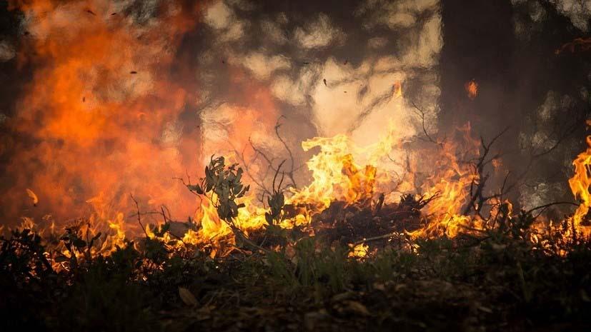 ВВоронежской области бушуют пожары