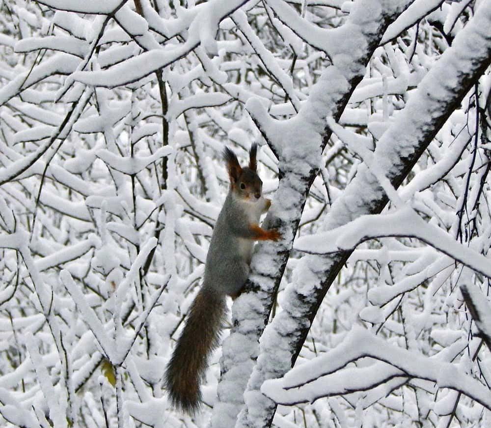 ВСибири прошел октябрьский снегопад, какого небыло более ста лет