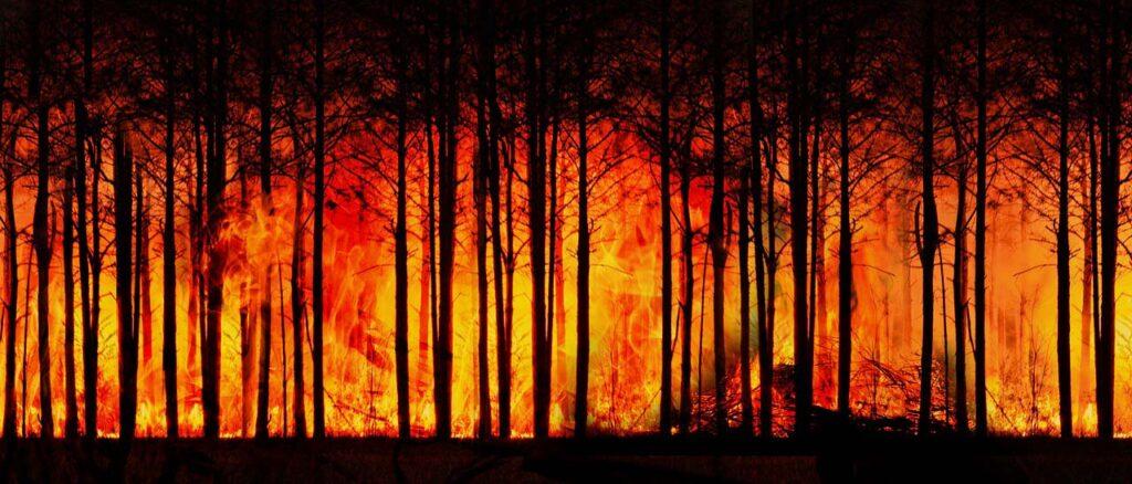 Самый страшный лесной пожар вСоветской России