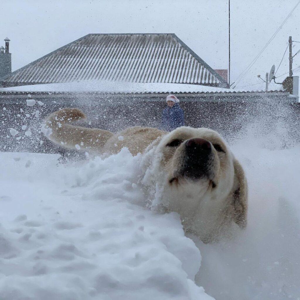 Непривычные косенним снегопадам регионы России засыпало снегом