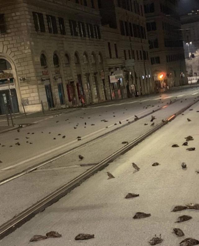 НаНовый Год улицы Рима усеяли мертвые птицы