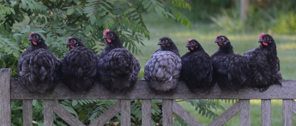 ВРоссии зарегистрированы первые вмире случаи заражения людей птичьим гриппом H5N8