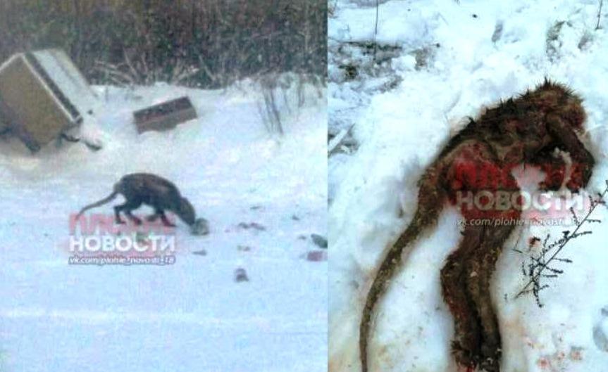 Странное существо, нападающее надомашних животных, поймали вВоронежской области