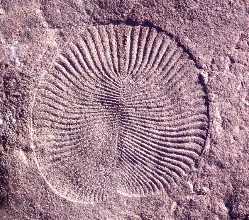 Ученые исследовали останки удивительных древних первых земных животных
