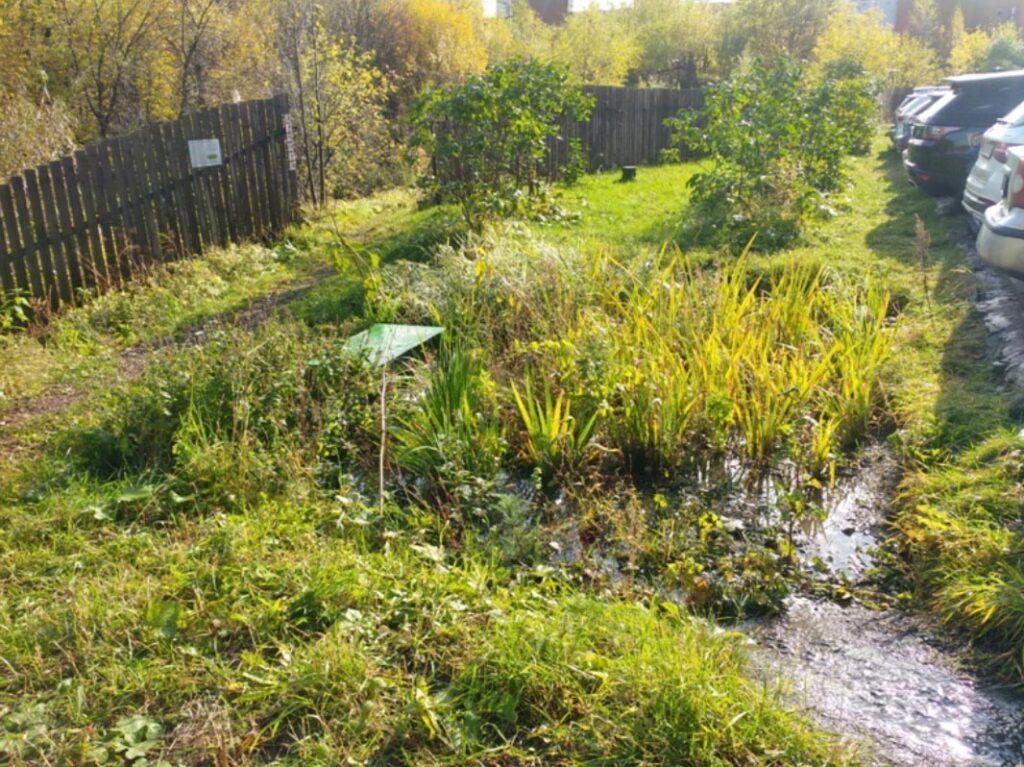 Проблему «ливневок» вРоссии предложили решить спомощью растений