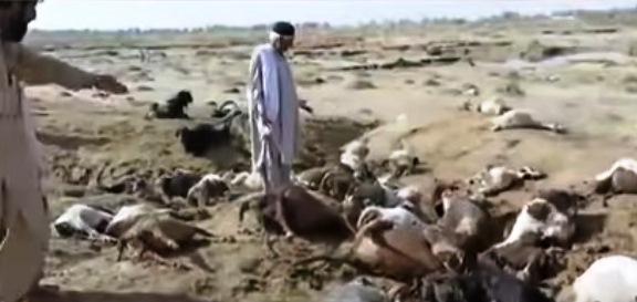 Смертоносный град вПакистане убил человека исотни животных
