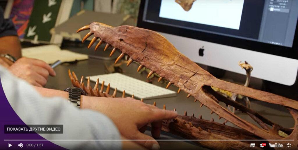Обнаружены останки гигантского летающего древнего ящера сразмахом крыльев в7 метров