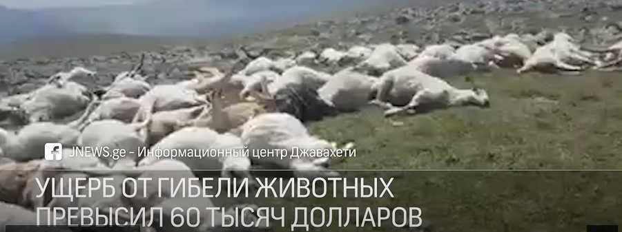 Нагоре вГрузии один удар молнии убил 530 овец